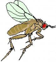 komar.jpg